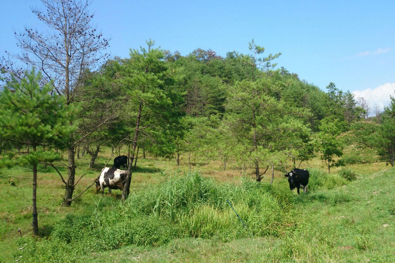 <自然放牧酪農>生乳使用